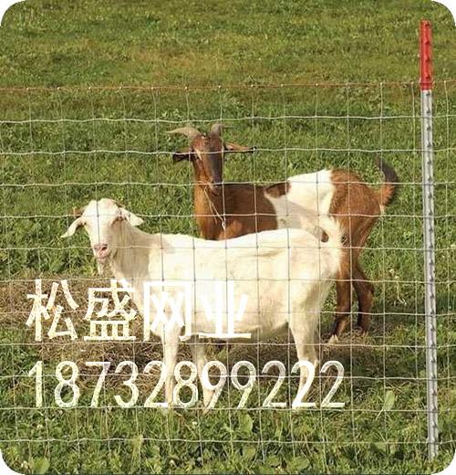 草原网围栏 (210).jpg