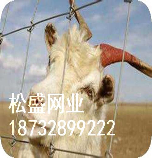 草原网围栏 (240).jpg