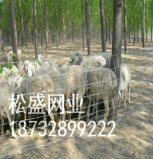 草原网围栏 (128).jpg