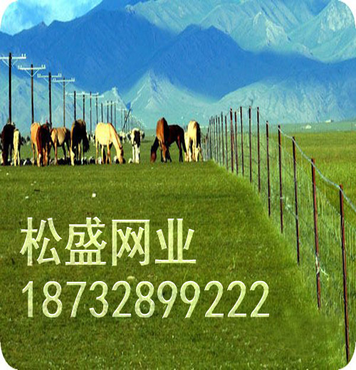 草原网围栏 (189).jpg